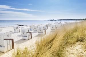 Sylt Strand Sträucher