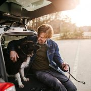 Trenngitter-Auto-Hund